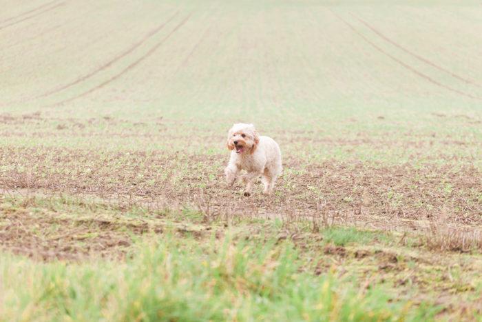 Woodland Engagement Shoot with dog enjoying the space
