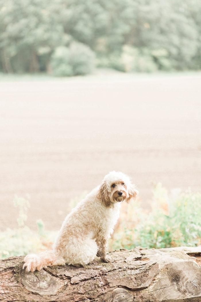 Woodland Engagement Shoot with dog portrait on fallen log