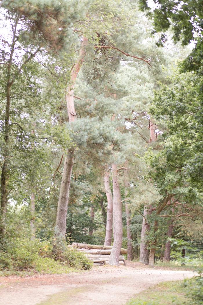 Woodland Engagement Shoot with dog countryside