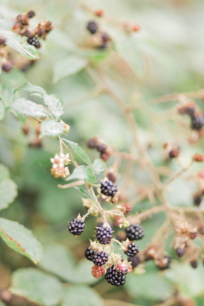Woodland Engagement Shoot fine art photography blackberries