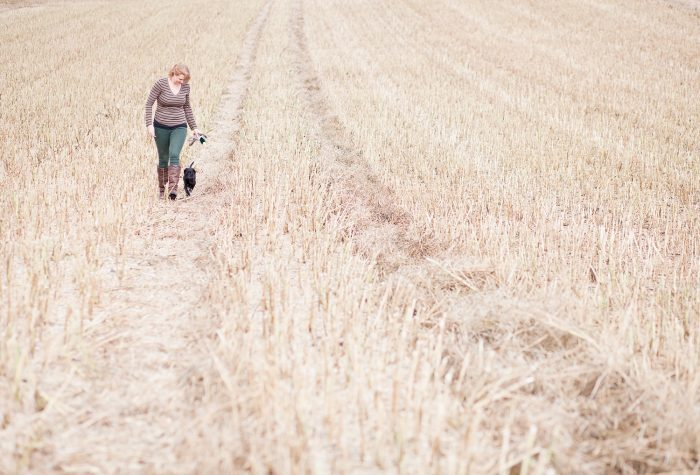 fine art lifestyle photography new puppy cornfield