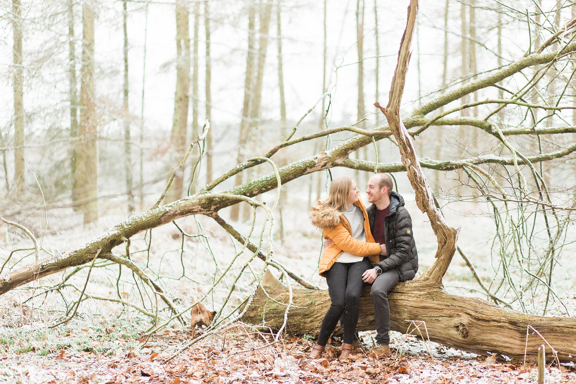 Woodland Engagement Shoot in snow wide angle of couple on fallen tree