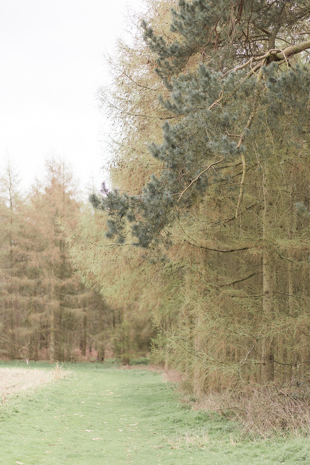 Dreamy woodland engagement shoot forest view