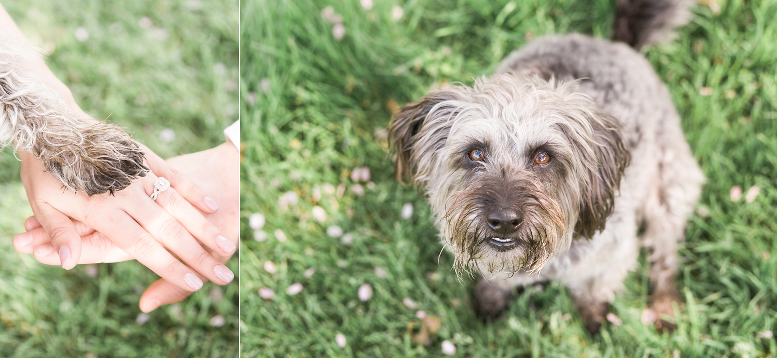 Engagement Shoot Spring Blossom Fine Art Wedding Photography sweet hand and paw shot with dog