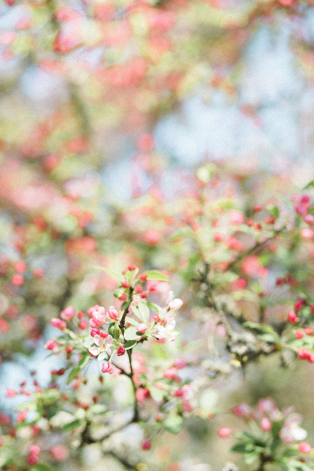Engagement Shoot Spring Blossom Fine Art Wedding Photography beautiful blossom